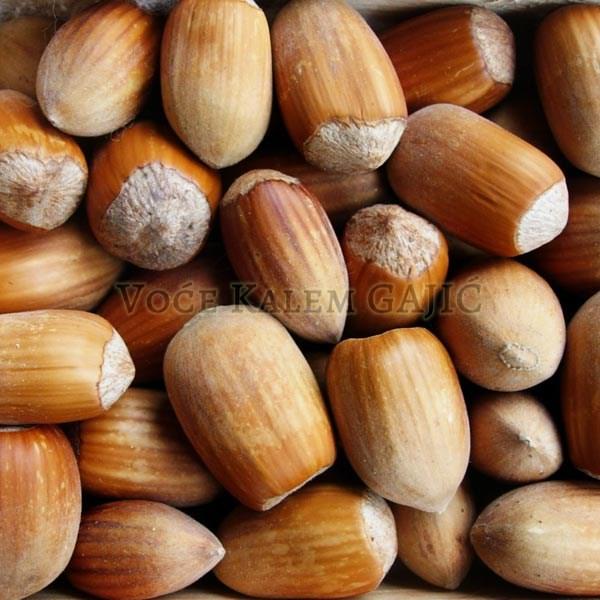 Sadnice voća - Sadnice lešnika Istarski Dugi