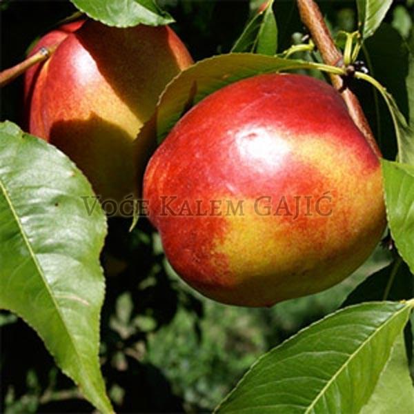 Sadnice voća - Sadnice nektarine Fantazija
