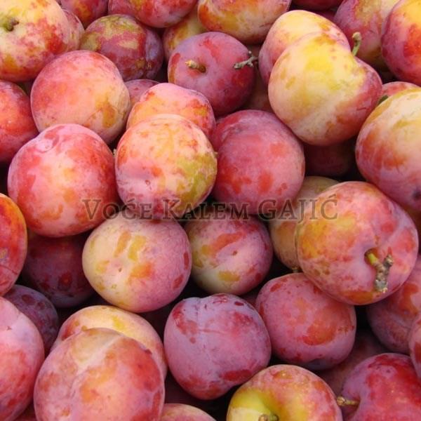 Sadnice voća - Sadnice šljive Ruska Dženarika