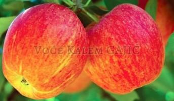 Izbor sorte jabuke za novi voćnjak