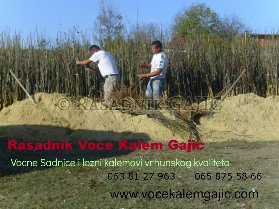 vocne-sadnice13